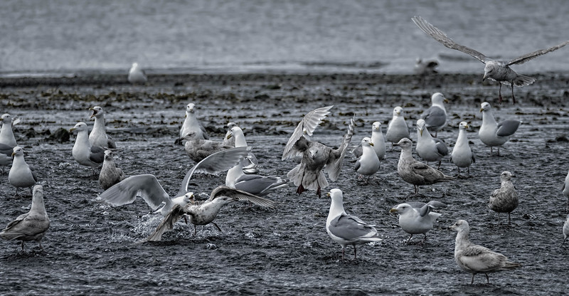 Colony of seagulls