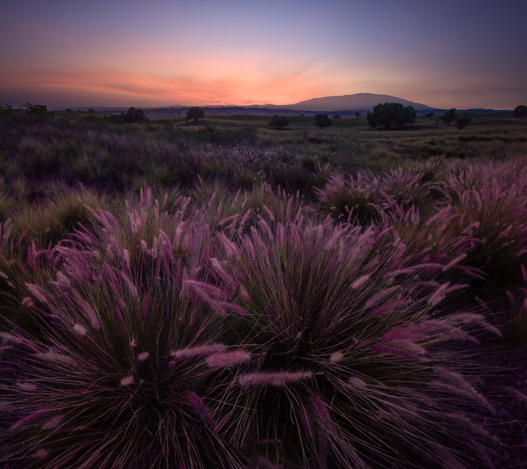 Lavender Light