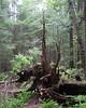 TreeRising_M5b_1177