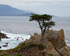 Famous tree on the 17 mile drive about Monterey  Bay, California - Feb 09