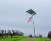 Flag-tree among grape vines in southern Sonoma Valley, north of San Francisco, California - Feb 09