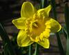 FlowerYard_3697