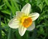 FlowerYard_3694
