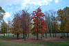 Another state park, with a few colorful trees at the entrance.