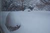 Our backyard - I think.