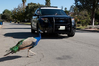 (16) Arcadia PD Patrol 11-11-15 Photography by Chris Miller