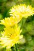 Yellow all in Blur