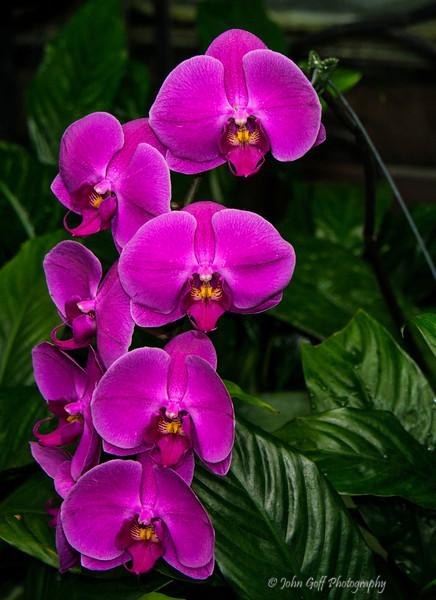 Flowers In A Row<br /> Longwood Gardens <br /> Kennett Square, Pennsylvania