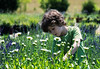 What's This<br /> Seven Oaks Lavender Farm<br /> Catlett, Virginia