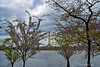 Washington Memorial<br /> Cherry Blossom Festival<br /> Washington D.C.