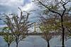 Washington Memorial<br /> Cherry Blossom Festival<br /> Washington D.C.