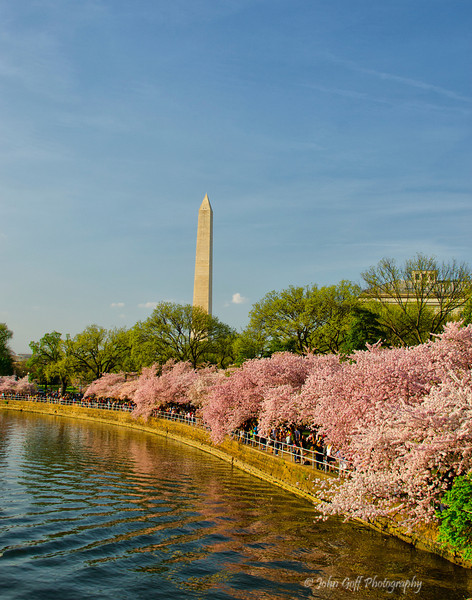 Standing Tall<br /> 2012 Cherry Blossom Festival, Washington Monment from the Tidal Basin<br /> Washington D.C.