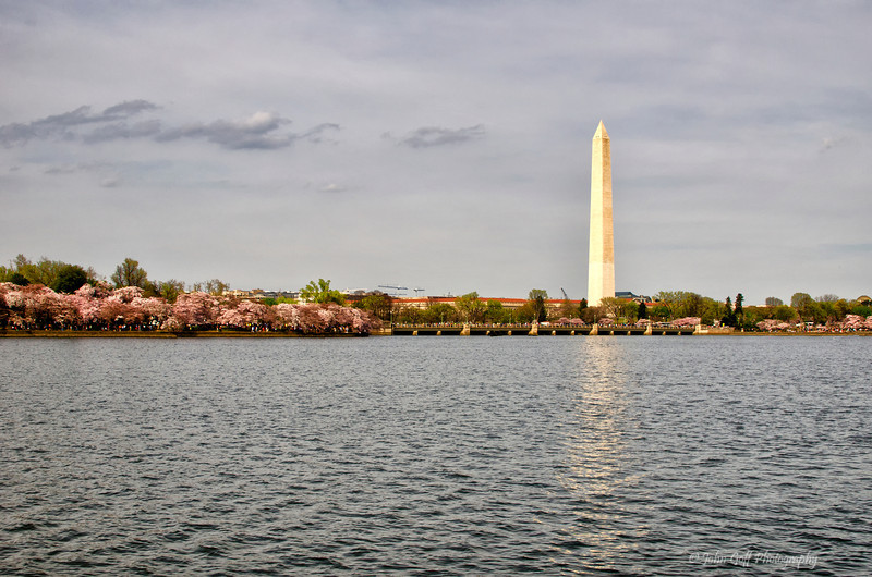 Tall and Strong<br /> 2012 Cherry Blossom Festival, Tidal Basin<br /> Washington D.C.