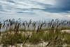 Wild Oats<br /> Bald Head Island, North Carolina