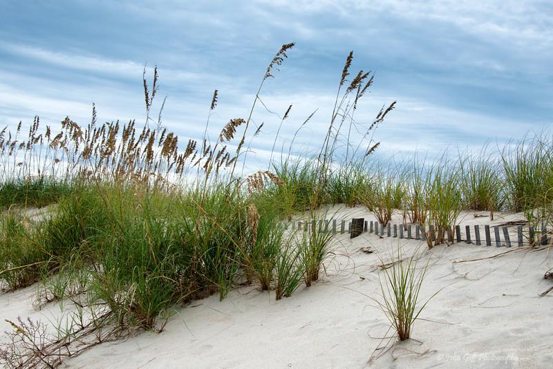 Sand Fence<br /> Bald Head Island, North Carolina