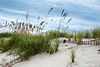 Sand Fence<br /> Bald Head Island, North Carolina