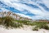 Oats<br /> Bald Head Island, North Carolina