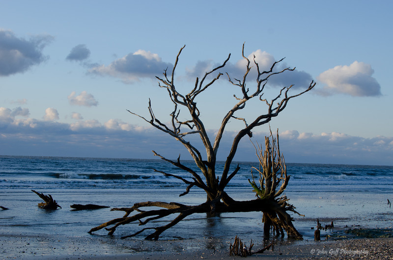 The Strong and Broken<br /> Botany Bay Plantation   <br /> Edisto Island,  South Carolina.
