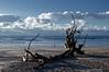 Roots For The Sky<br /> Botany Bay Plantation   <br /> Edisto Island,  South Carolina.