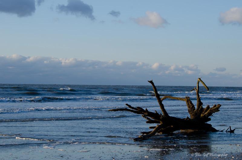 Beached Tree<br /> Botany Bay Plantation   <br /> Edisto Island,  South Carolina.