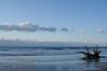 One Beached Tree<br /> Botany Bay Plantation   <br /> Edisto Island,  South Carolina.
