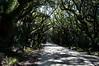 The Entrence<br /> Botany Bay Plantation   <br /> Edisto Island,  South Carolina.