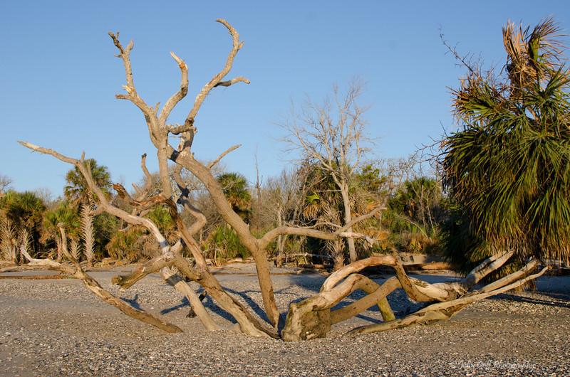 Mangled<br /> Botany Bay Plantation   <br /> Edisto Island,  South Carolina.