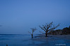 Blue Morning<br /> Botany Bay Plantation   <br /> Edisto Island,  South Carolina.