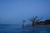 Blue Morning<br /> Botany Bay Plantation   <br /> Edisto Island,  South Carolina.