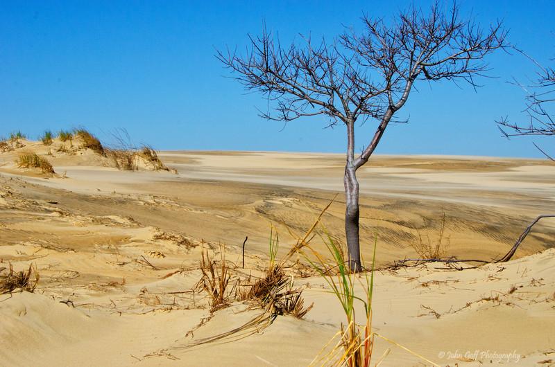 Dune<br /> Cape Hatteras, North Carolina