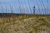 Through the Grass<br /> Cape Hatteras, North Carolina