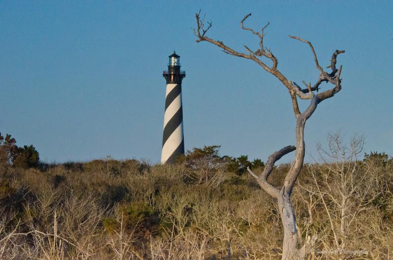 Tree<br /> Cape Hatteras, North Carolina