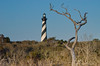 Tree<br /> Cape Hatteras, North Carolina