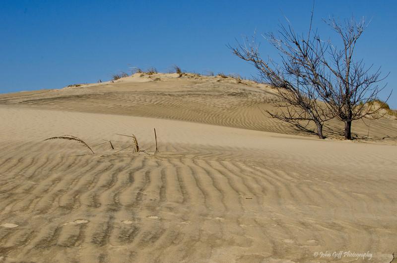 Sand Tree<br /> Cape Hatteras, North Carolina