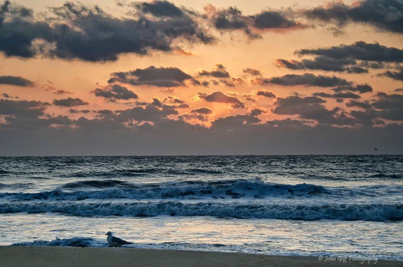 Bird at Sunset<br /> Cape Hatteras, North Carolina