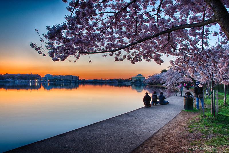 Waiting For The sun<br /> Cherry Blosson 2014<br /> Washington D.C.