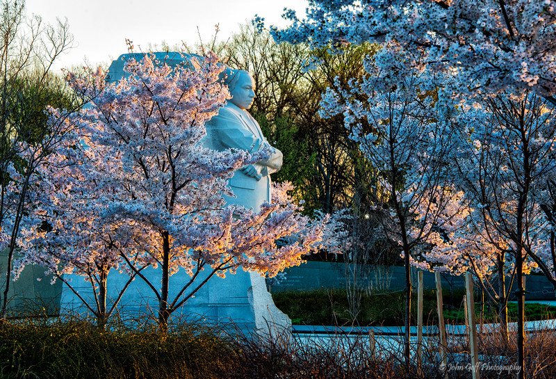 Through The Trees<br /> Cherry Blosson 2014<br /> Washington D.C.