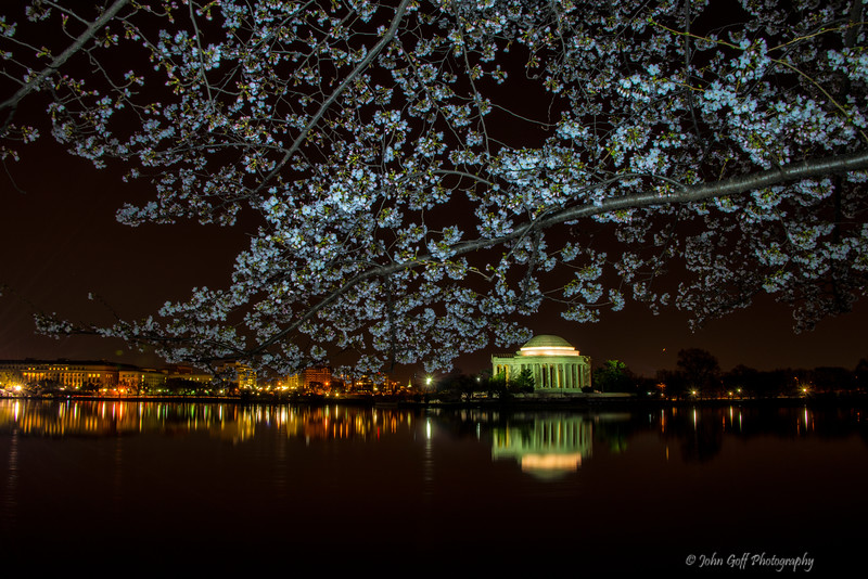 Early One Morning<br /> Cherry Blosson 2014<br /> Washington D.C.