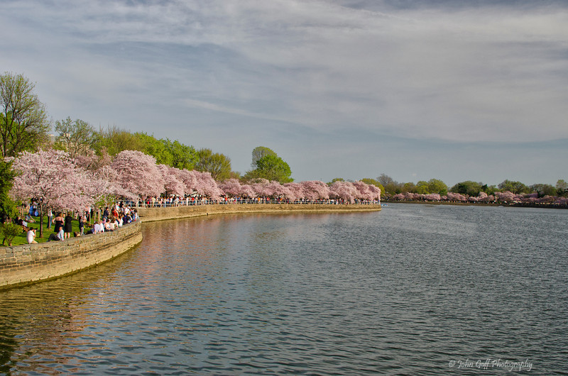 A View<br /> 2012 Cherry Blossom Festival, Tidal Basin<br /> Washington D.C.