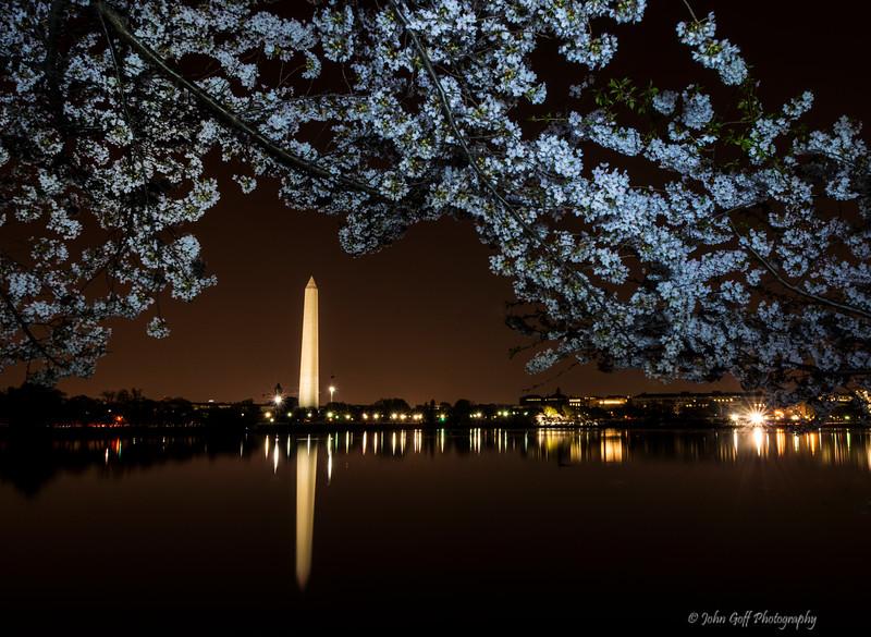 Blossoms Over Washington<br /> Cherry Blosson 2014<br /> Washington D.C.
