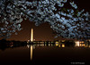 Blossoms Over Washington<br /> Cherry Blosson 2014<br /> Washington D.C.