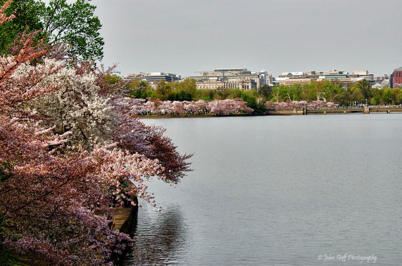 Pink Basin<br /> 2012 Cherry Blossom Festival, Tidal Basin<br /> Washington D.C.