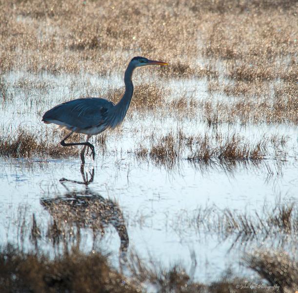 Standing Around<br /> Chincoteague National Wildlife Refuge<br /> Chincoteague, Virginia