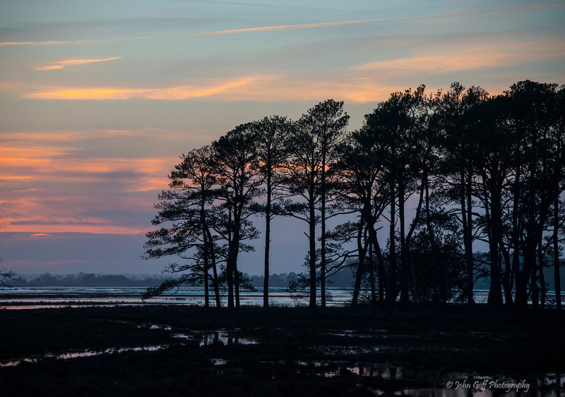 Trees In The Way<br /> Chincoteague National Wildlife Refuge<br /> Chincoteague, Virginia