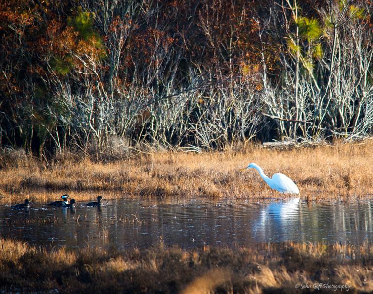 I See You<br /> Chincoteague National Wildlife Refuge<br /> Chincoteague, Virginia