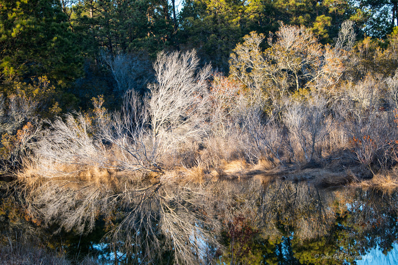 Seeing Double<br /> Chincoteague National Wildlife Refuge<br /> Chincoteague, Virginia