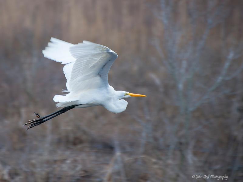 Take Off<br /> Chincoteague National Wildlife Refuge<br /> Chincoteague, Virginia