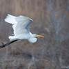 Take Off<br /> Chincoteague National Wildlife Refuge<br /> Chincoteague, Virginia