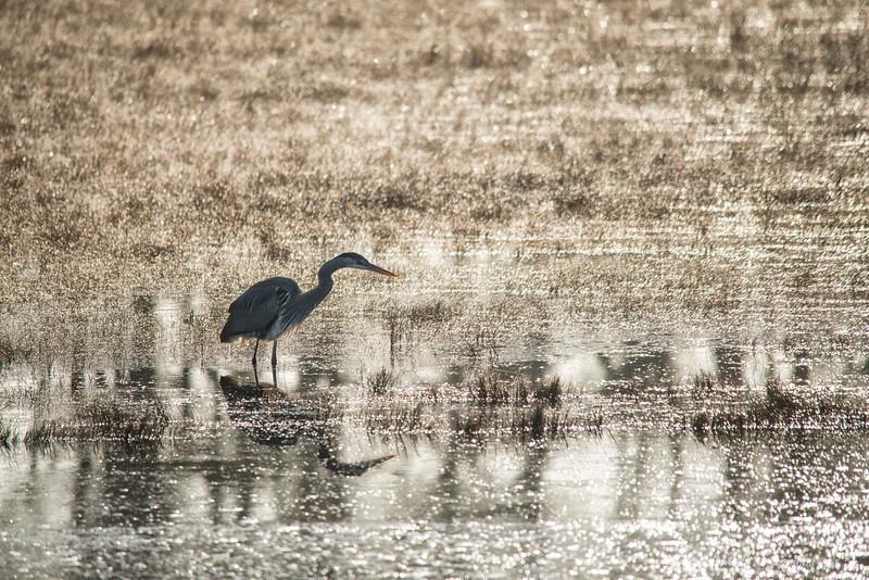 Glisten Pond<br /> Chincoteague National Wildlife Refuge<br /> Chincoteague, Virginia