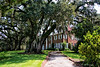 Walk To The Main House<br /> Hobcaw Barony Plantation<br /> Georgetown, South Carolina